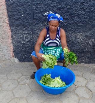 Lovely lettuce - freshly picked