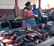 One of over 50 fish market ladies