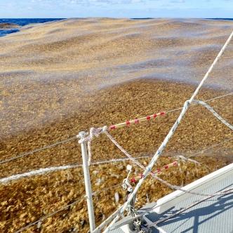 Giant rafts of Sargassum Seaweed