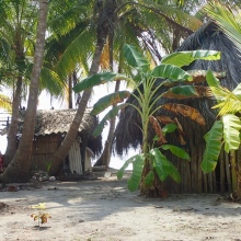 Guna living huts